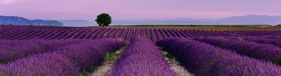 LavenderCrop