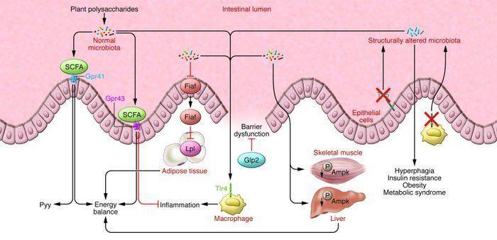 Microbfunctions