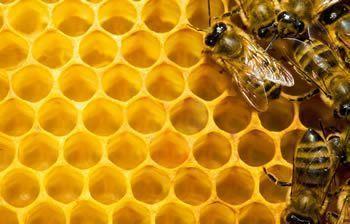 honeybees sm