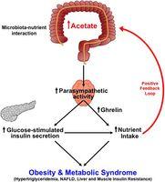 dietmicrobiota interaction obesity