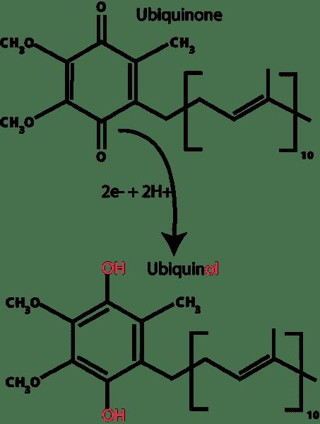 Ubiquinol Structure