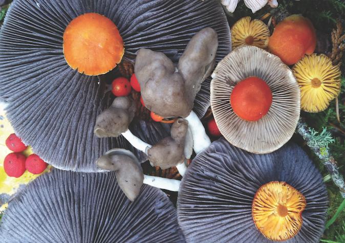 Mushroom Elves small